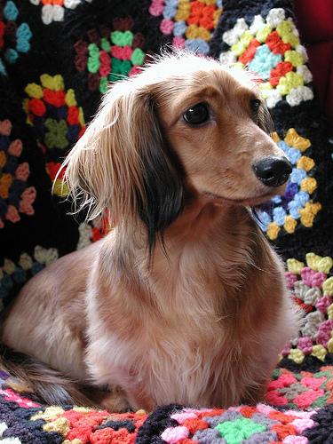 manta-afgana-adoraideas-mascotas